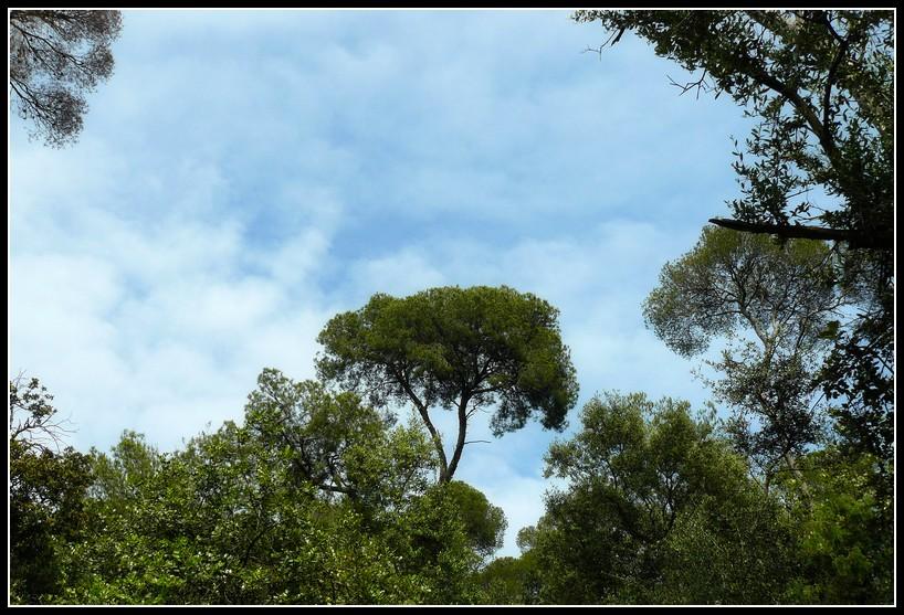 Balade vers le Mont Boron (Nice) 3