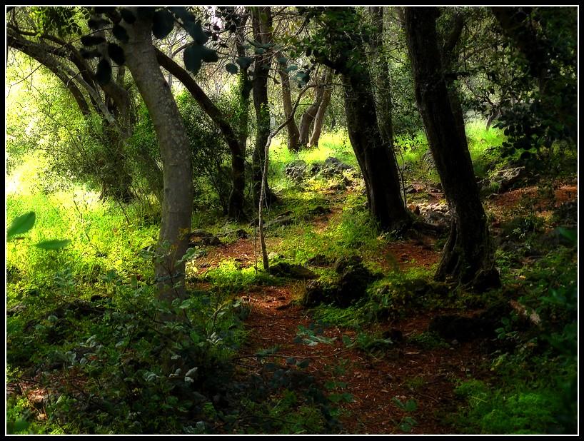 Balade vers le Mont Boron (Nice) 6